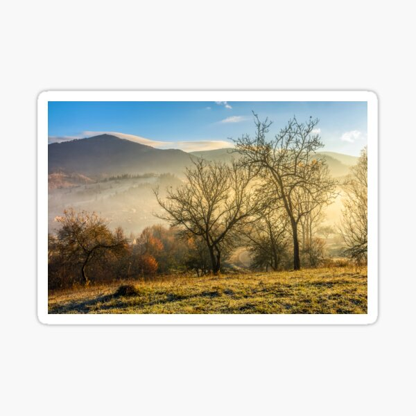 autumn forest on hillside in fog Sticker