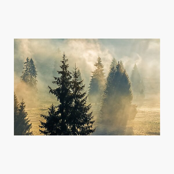 fog in the spruce forest Photographic Print