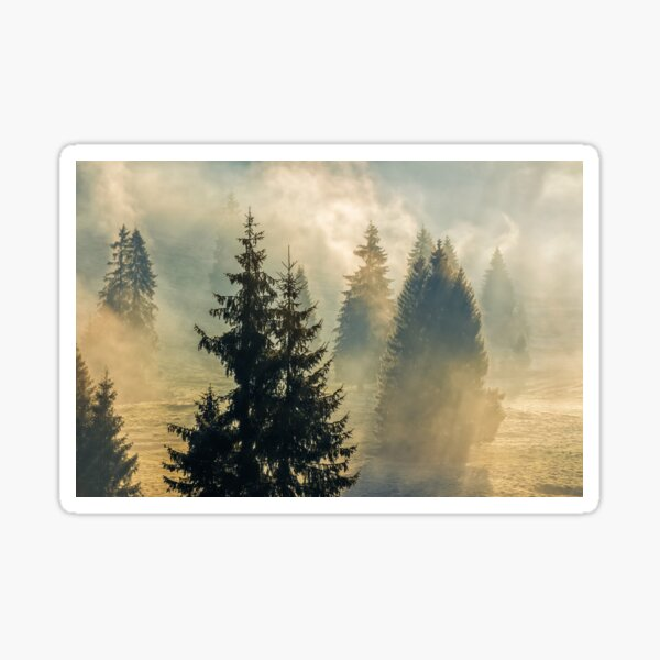 fog in the spruce forest Sticker