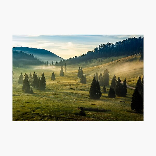 spruce forest on a hill side in fog Photographic Print