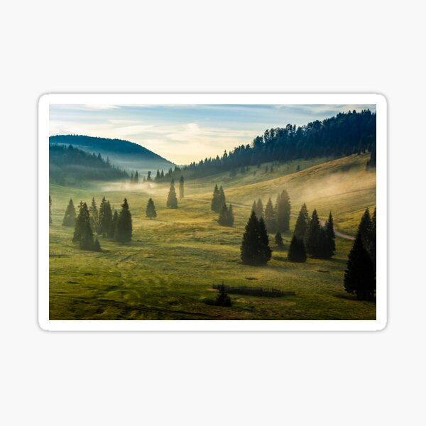 spruce forest on a hill side in fog Sticker