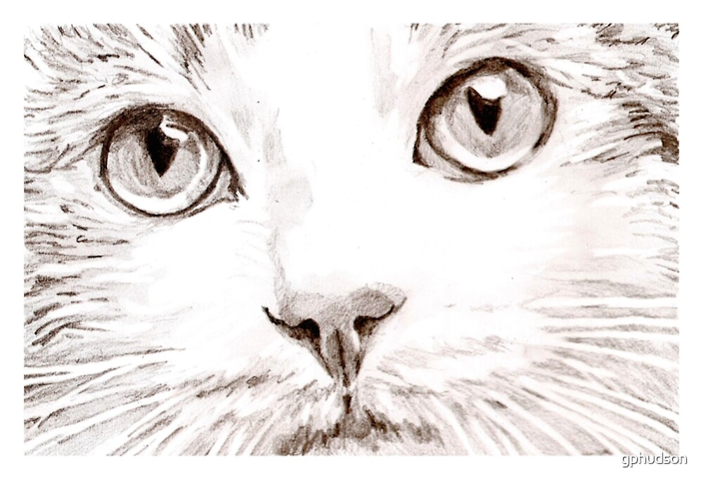 Cat by gphudson