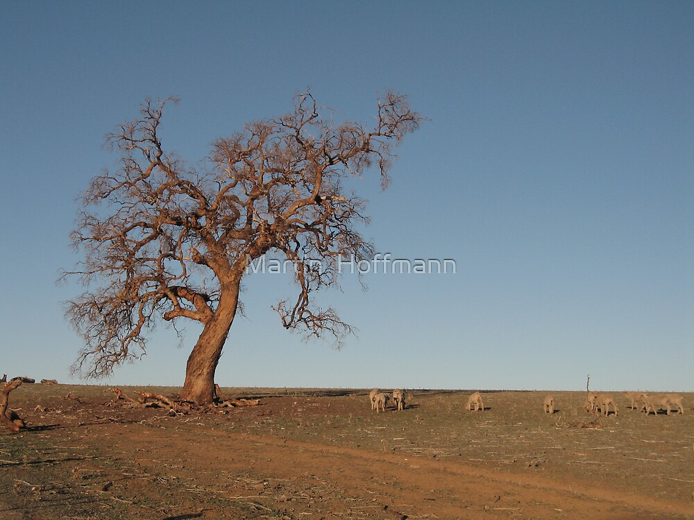 outback tree by Martin  Hoffmann