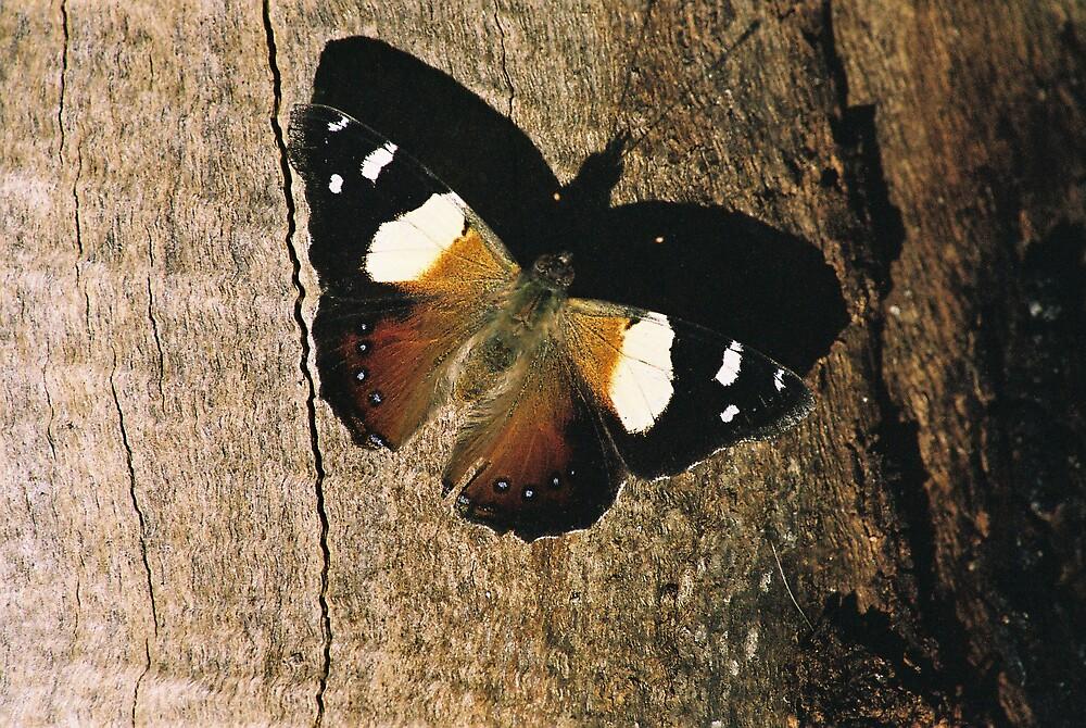 Woodgrain Moth Shadow by GreenHoodMaiden