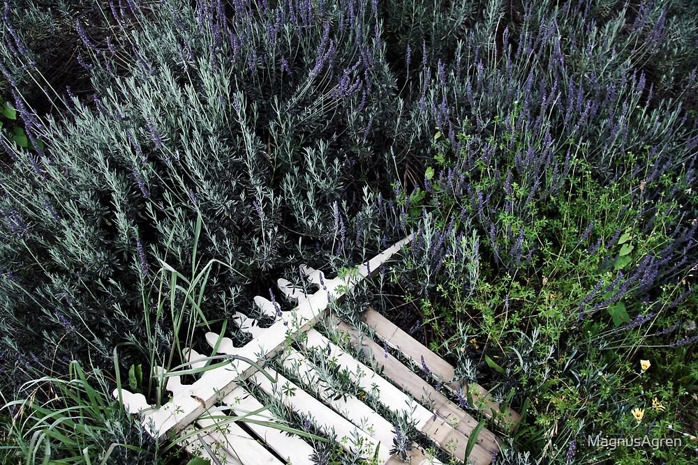 Fence among the lavender by MagnusAgren