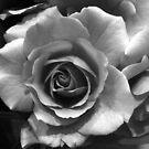 Beauty Unfolding by cjane