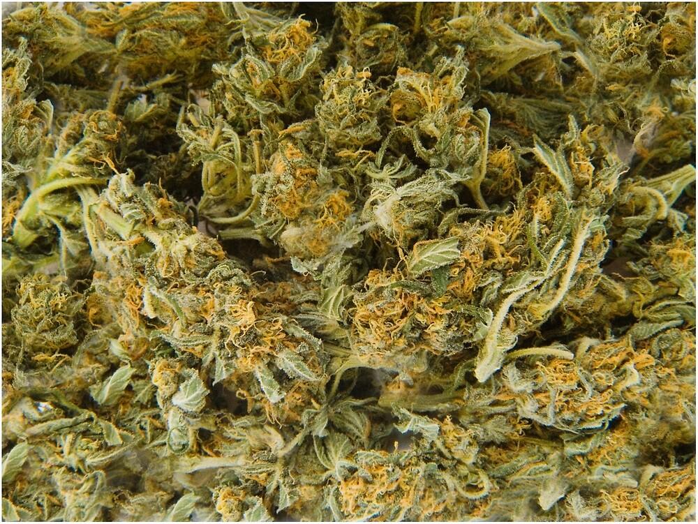 cannabis by Paul Tremble