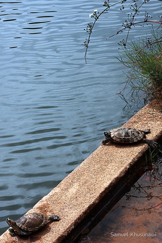 Sunbathing Turtles by Samuel  Khusunawi
