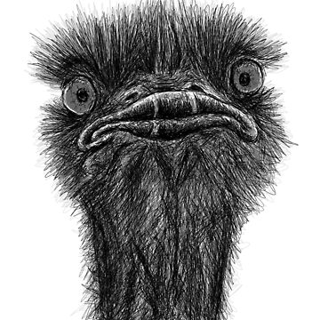 Ostrich Scribble Sketch by sandyeates