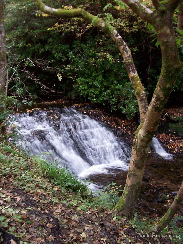 Mini waterfall, at Glencar Waterfall in Ireland by Vicki Beachman