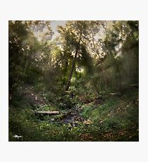 Swamp Forest • 2017 Photographic Print