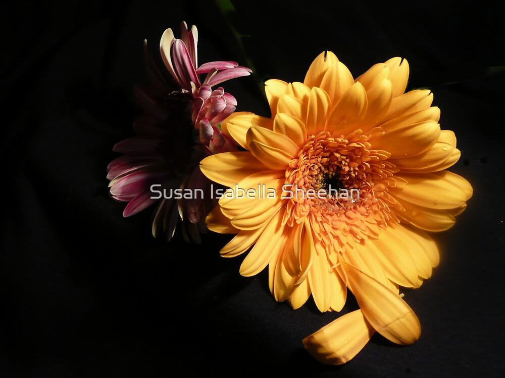 Blessings by Susan Isabella  Sheehan