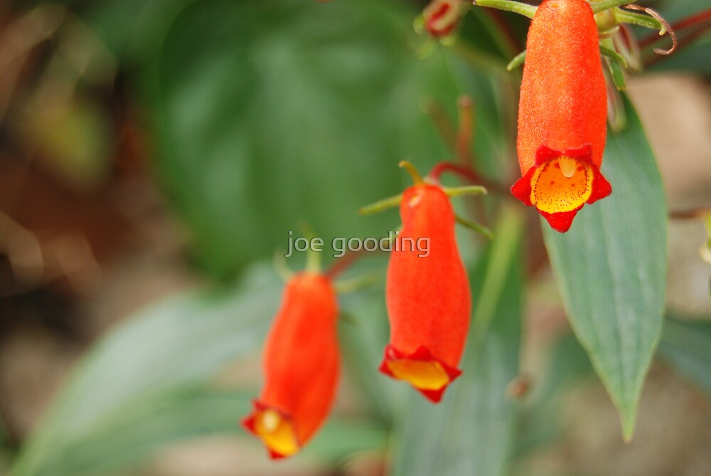 jungle flower VI by joe gooding