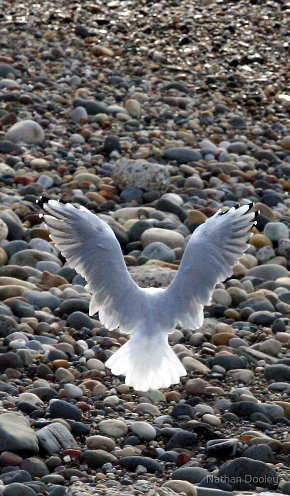 Angelic Gull by Nathan Dooley