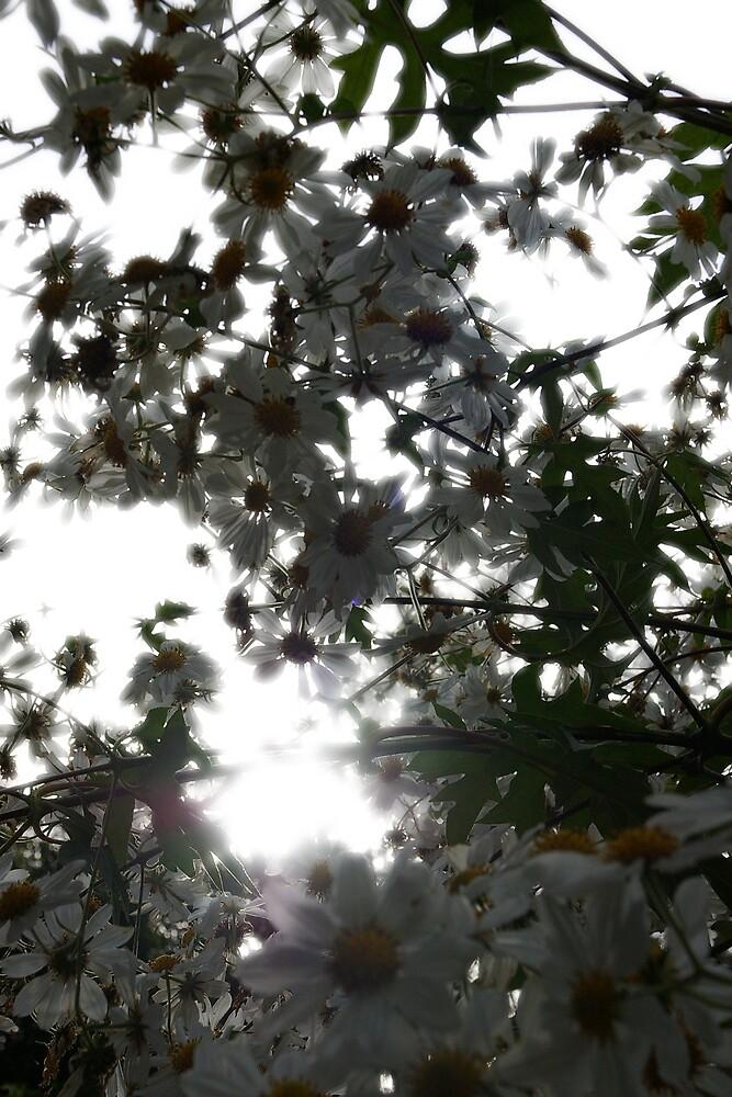 Sunshine makes me happy by Deidre Cripwell