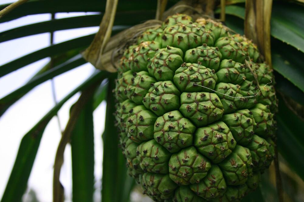 Green Fruit by GregsGirl