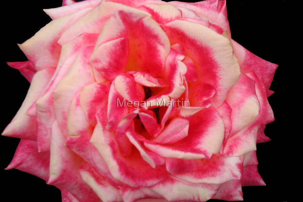 Everything's Coming Up Roses by Megan Martin
