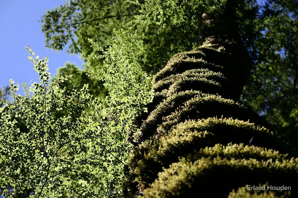 Sunlit Beech Tree by Erland Howden