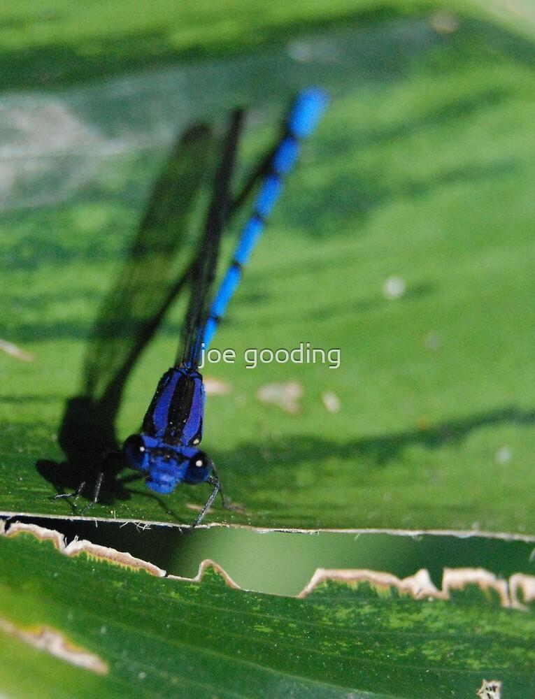 blue dragon by joe gooding