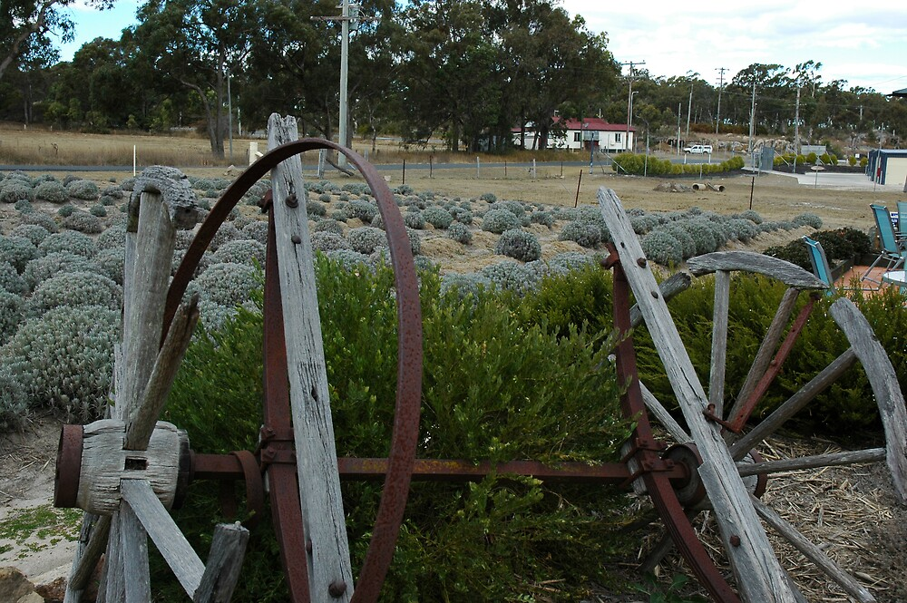 Lavender Farm at Stanthorpe, NSW by DePaul