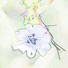 Blue cornflower colored pencils by hummingbirds