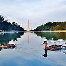 DC ducks by Stephen Burke