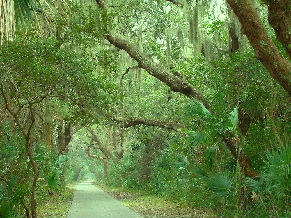 Allee of Oaks by lowcountrypen