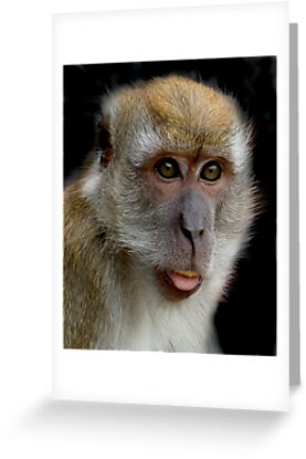 Macaque on Black by ApeArt