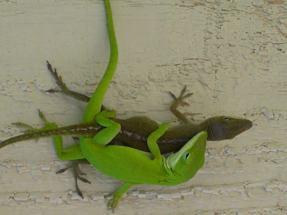 gecko in love by lowcountrypen
