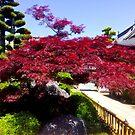 Sairinji Temple Shikoku Japan by Caren della Cioppa