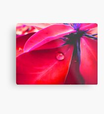 tear of the leaf Metal Print