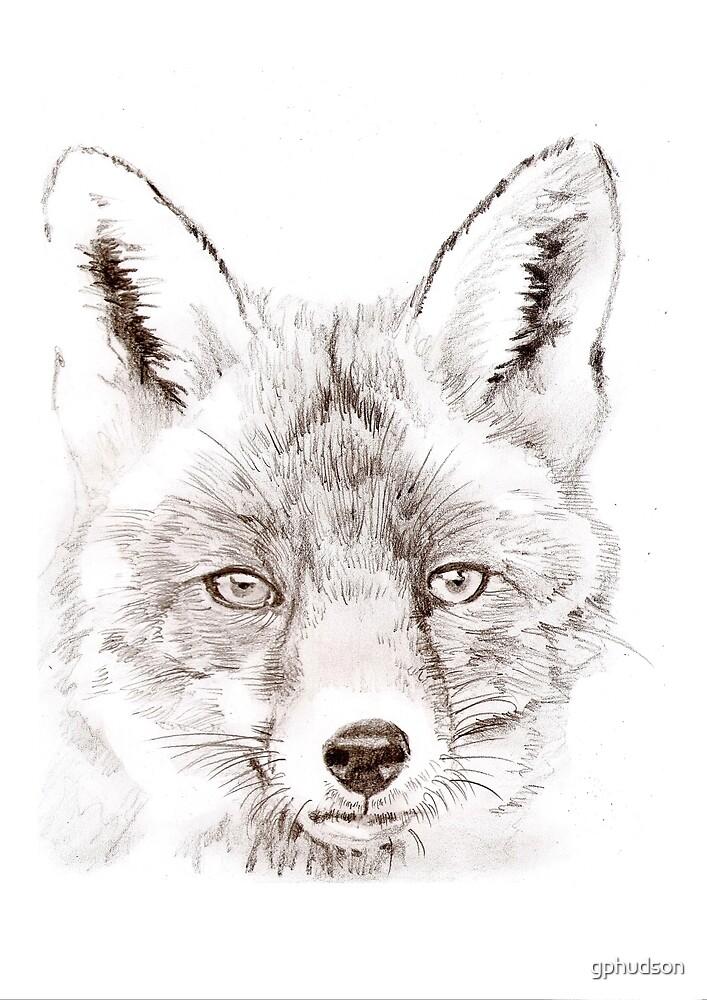 Fox by gphudson