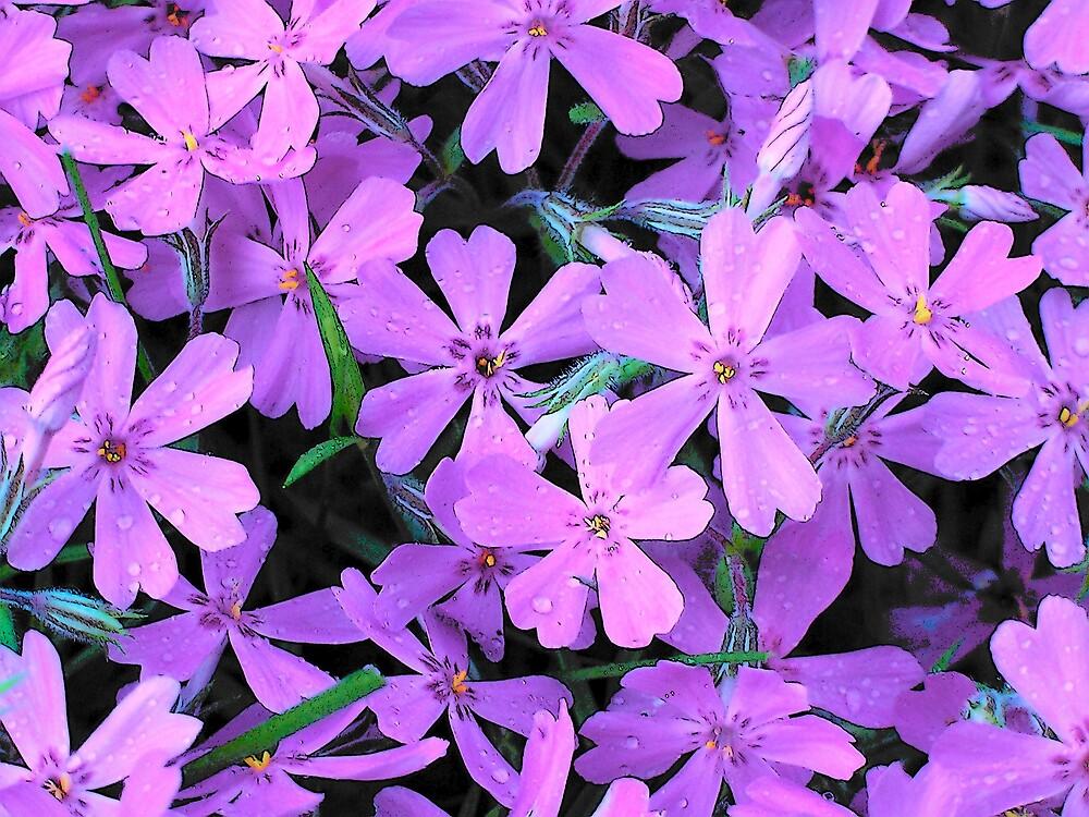 Lilac Bunch by Gene Cyr