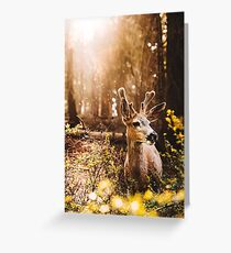 a deer in the yosemite national park Greeting Card