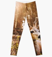 a deer in the yosemite national park Leggings