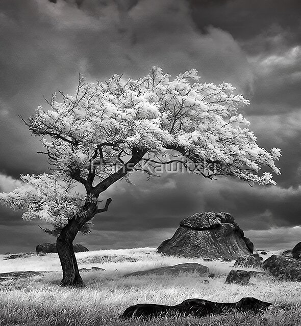 017 Passing light - Infrared by Hans Kawitzki