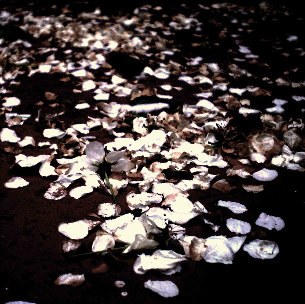 Springs Casualties by Jeff Brewster