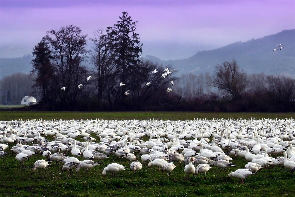 flight of the snow geese by gabryshak
