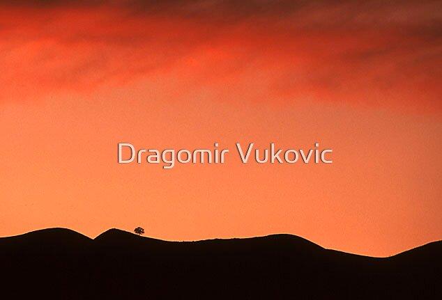Living Alone by Dragomir Vukovic