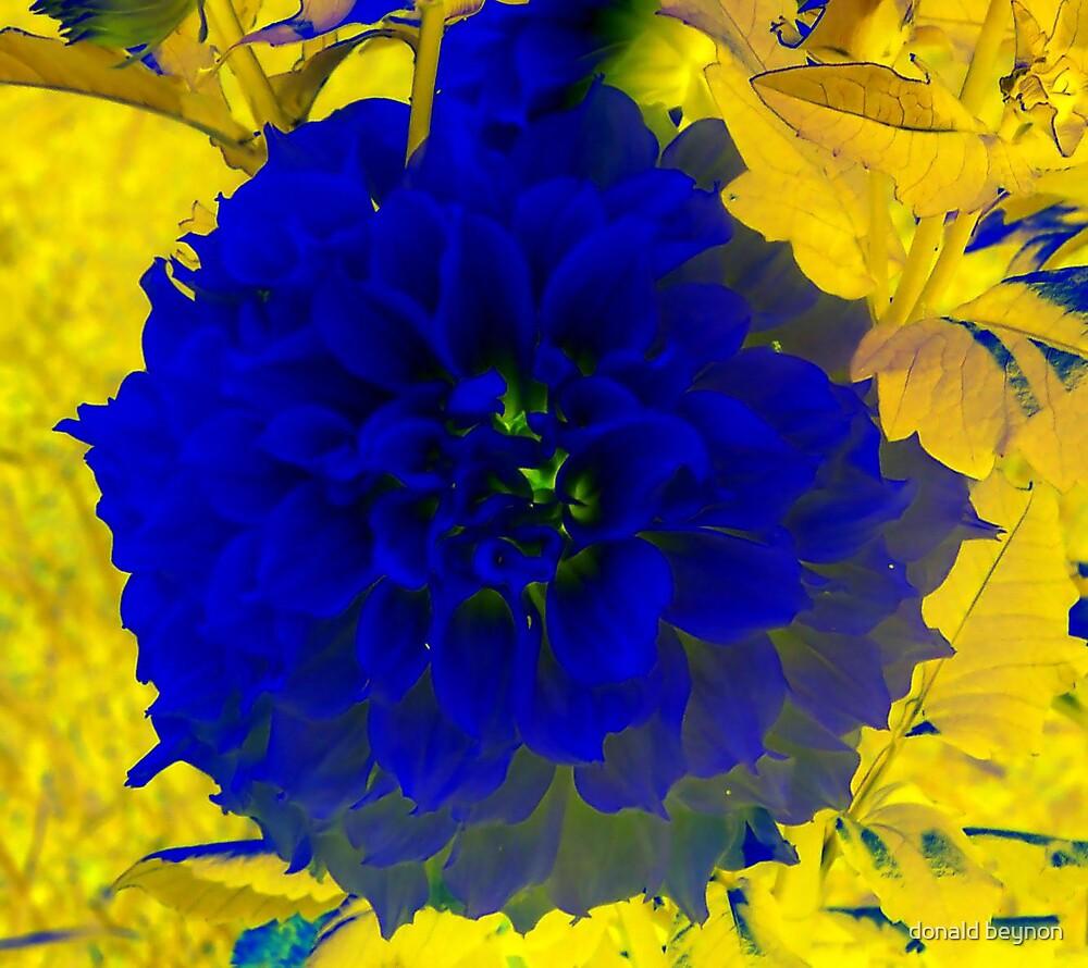 blue burst by donald beynon