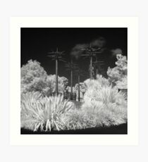 020 Botanical Garden - Infrared Art Print