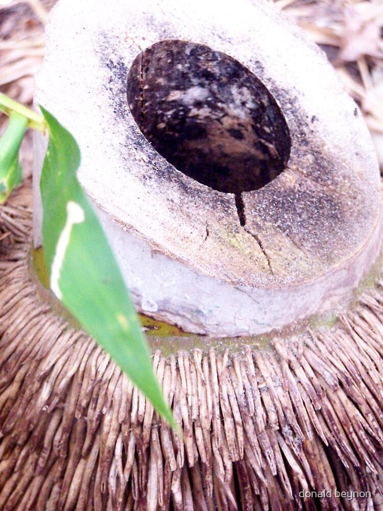 palm by donald beynon