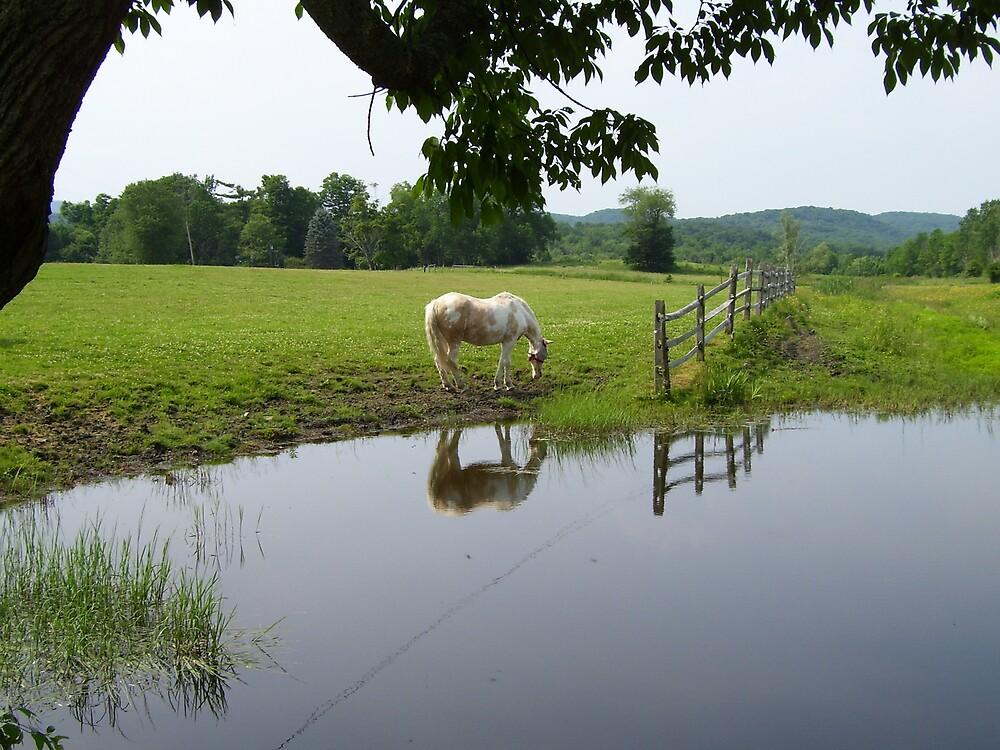 Horse in Berkshires 3 by Christine Frydenborg Dargon