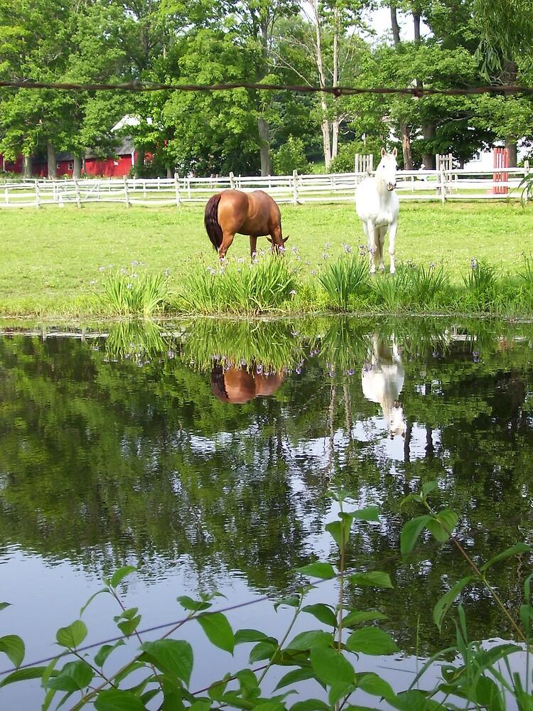 Horses in Berkshires 4 by Christine Frydenborg Dargon