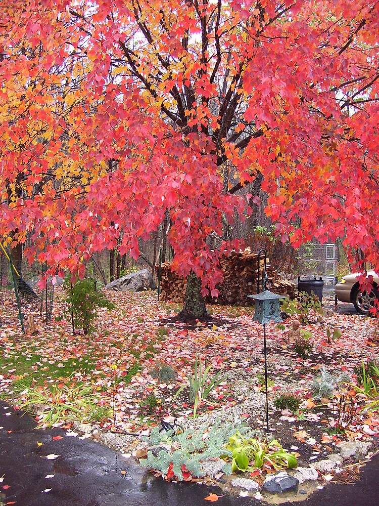 Autumn color by Christine Frydenborg Dargon