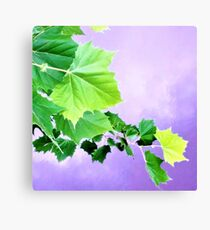 Sycamore Tree Leaves Over Water  Canvas Print