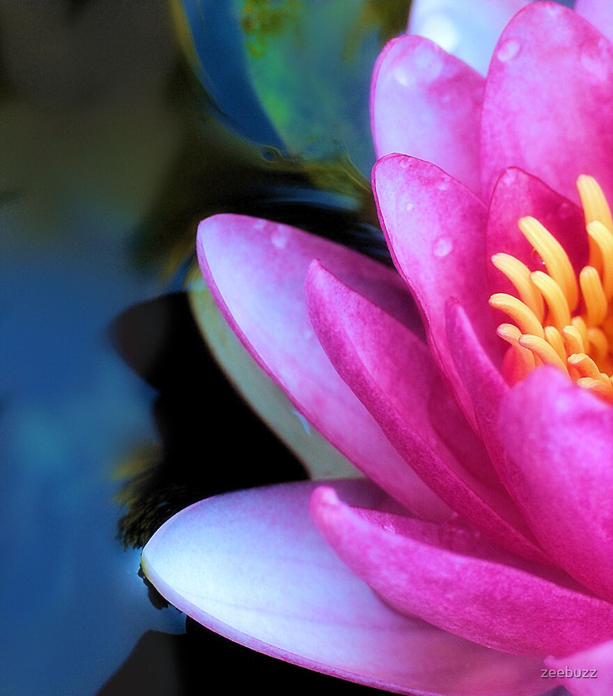 Pink by zeebuzz
