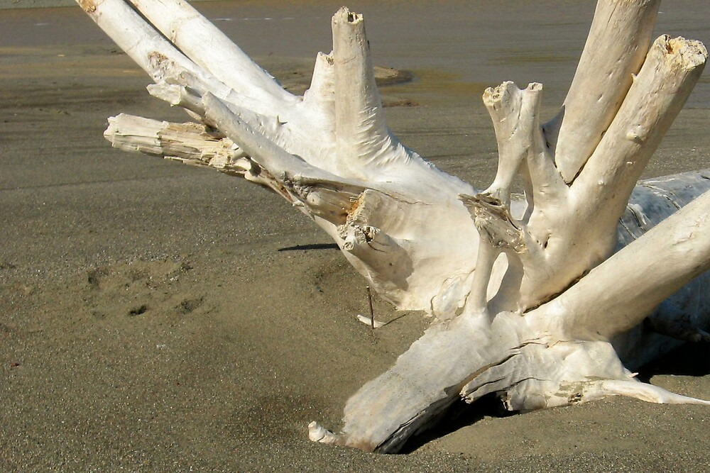 Driftwood by Carrie Norberg