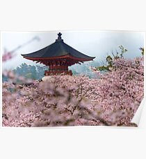 Japan Temple Cherry Blossoms Poster