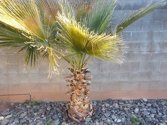 california palm tree by photofanatic